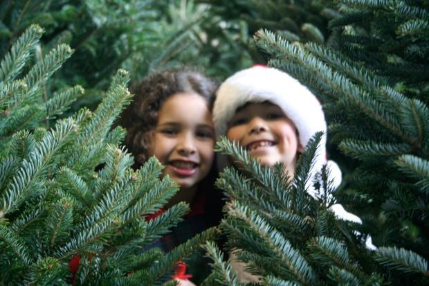 Kids-and-Christmas-trees-1
